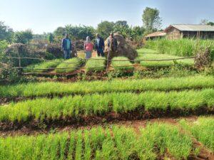 FSL Bahir Dar - Model farmer veg. nursery