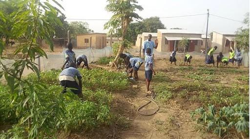 FSL Cotonou: School garden