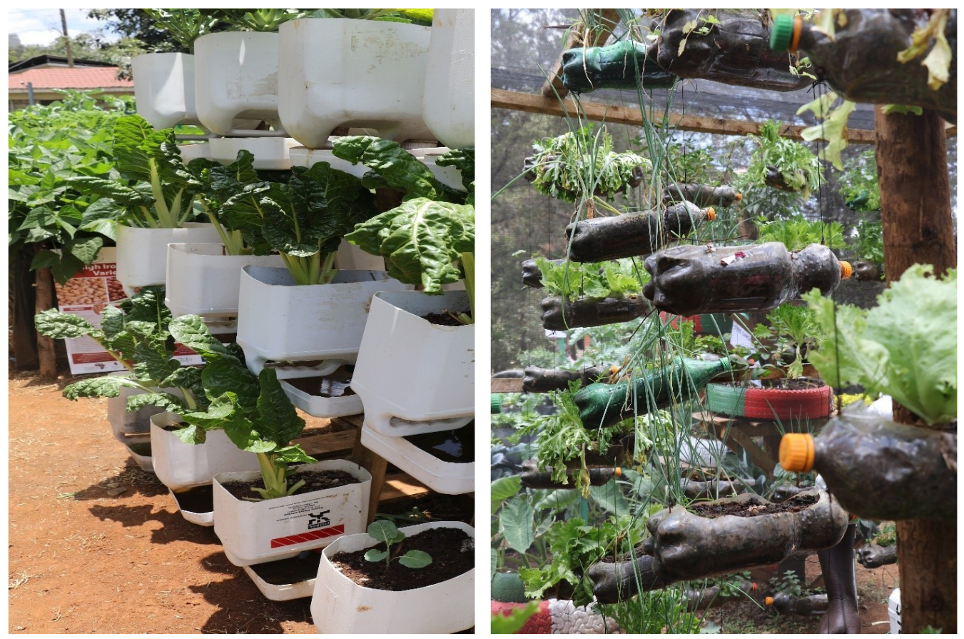 Vertical gardening: using limited space to maximize food production